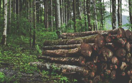 Etude sur le même thème : potentiel de valorisation chimique du carbone biosourcé