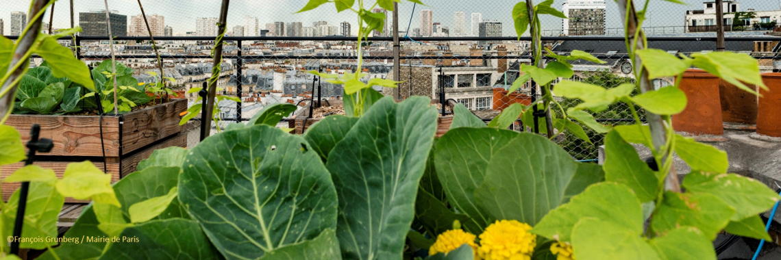 Article – Innovations pour une agriculture urbaine durable