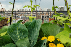 Article - Innovations pour une agriculture urbaine durable