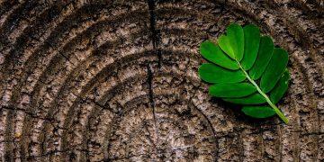 Webinaire - Chimie du Végétal : quelle place dans la bioéconomie ?