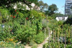 L'Université Gustave Eiffel, partenaire du CVT AllEnvi sur l'agriculture urbaine